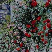Powerscourt Climbing Rose 1