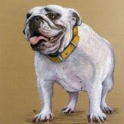 Bob,the Bulldog