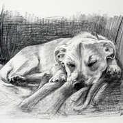 Buster Sleeping