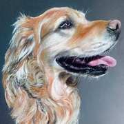 Fats,a Golden Labrador Retriever