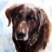 Heidi. A Chocolate Labrador,Ink