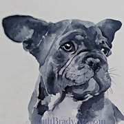 Ludo,a French Bulldog