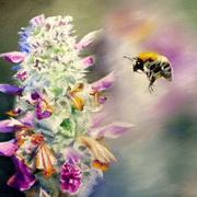 The Nectar Hunt