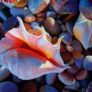 Pebbles 'n Shells